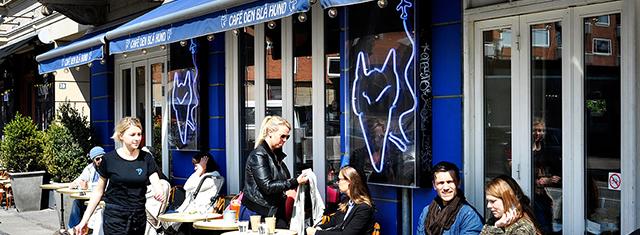 Cafe-den-bla_-hund-studierabat