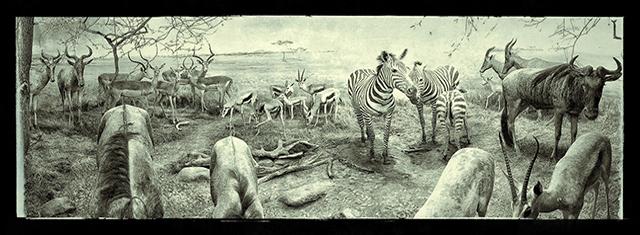 Naturhistorisk-museum_studierabat